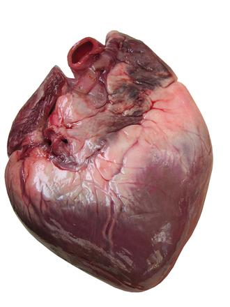 Zdrowe serce dzięki badaniu EKG