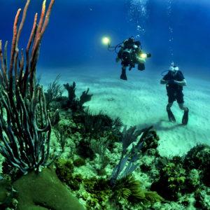 nurkowanie w tropikach
